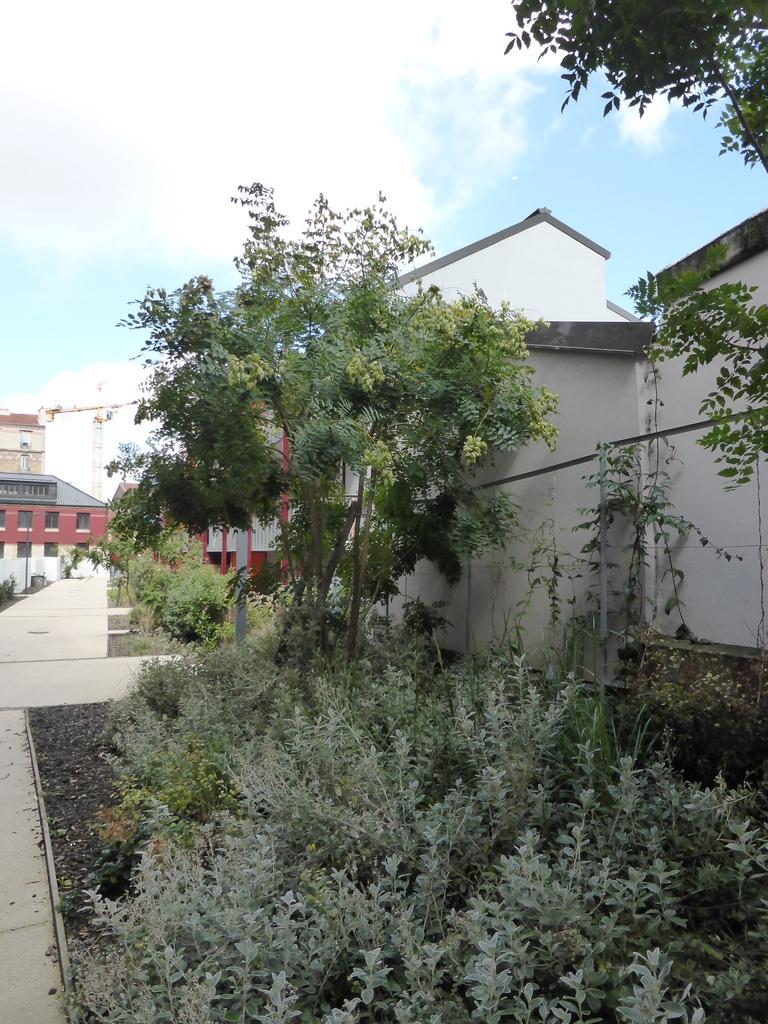 Atelier Alice Tricon / Jardins / Paysages - Les Céramiques<br>opération immobilière - Montreuil (93) - Opération immobilière à Montreuil Céramiques plantations  Alice Tricon