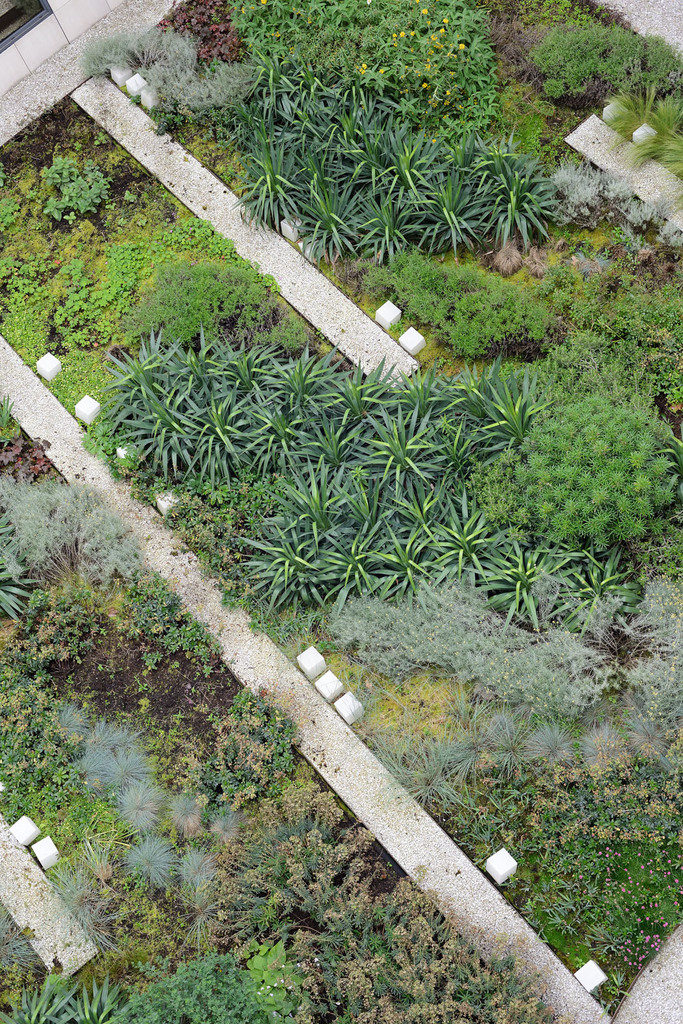 Atelier Alice Tricon / Jardins / Paysages - Issy - ISSY LES MOULINEAUX (92) - trame rectiligne liée au bâti