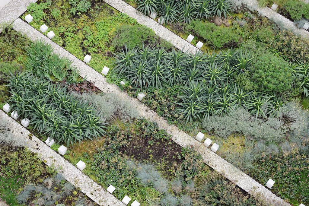 Atelier Alice Tricon / Jardins / Paysages - Issy - ISSY LES MOULINEAUX (92) - vue d'en haut