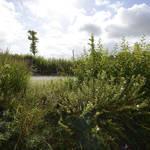 Atelier Alice Tricon / Jardins / Paysages - Séreilhac