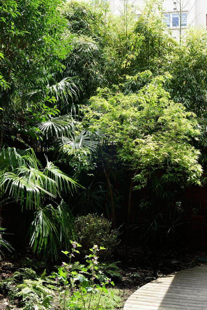 Atelier Alice Tricon / Jardins / Paysages - Passage Soupirs<br>Jardin privé - Paris (75020) - Passage des Soupirs jardin privé  forêt miniature Alice Tricon