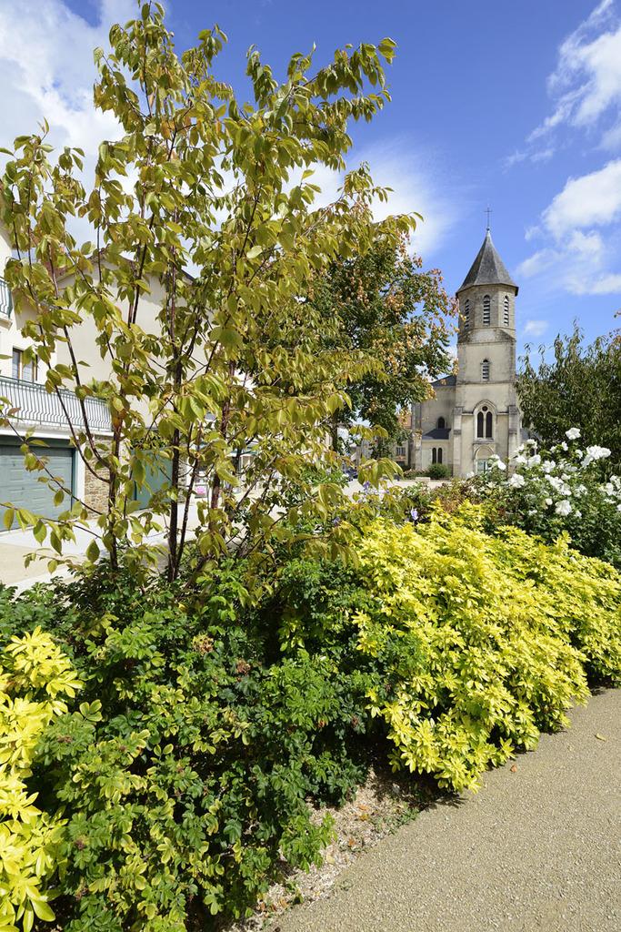 Atelier Alice Tricon / Jardins / Paysages - place de l'Église<br>Aixe-sur-Vienne - Place Armand Fayard, Aixe sur Vienne (87) - Place de l'Eglise Aixe-sur-Vienne haie de séparation Alice Tricon