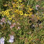 Atelier Alice Tricon / Jardins / Paysages - place de l'ÉgliseAixe-sur-Vienne