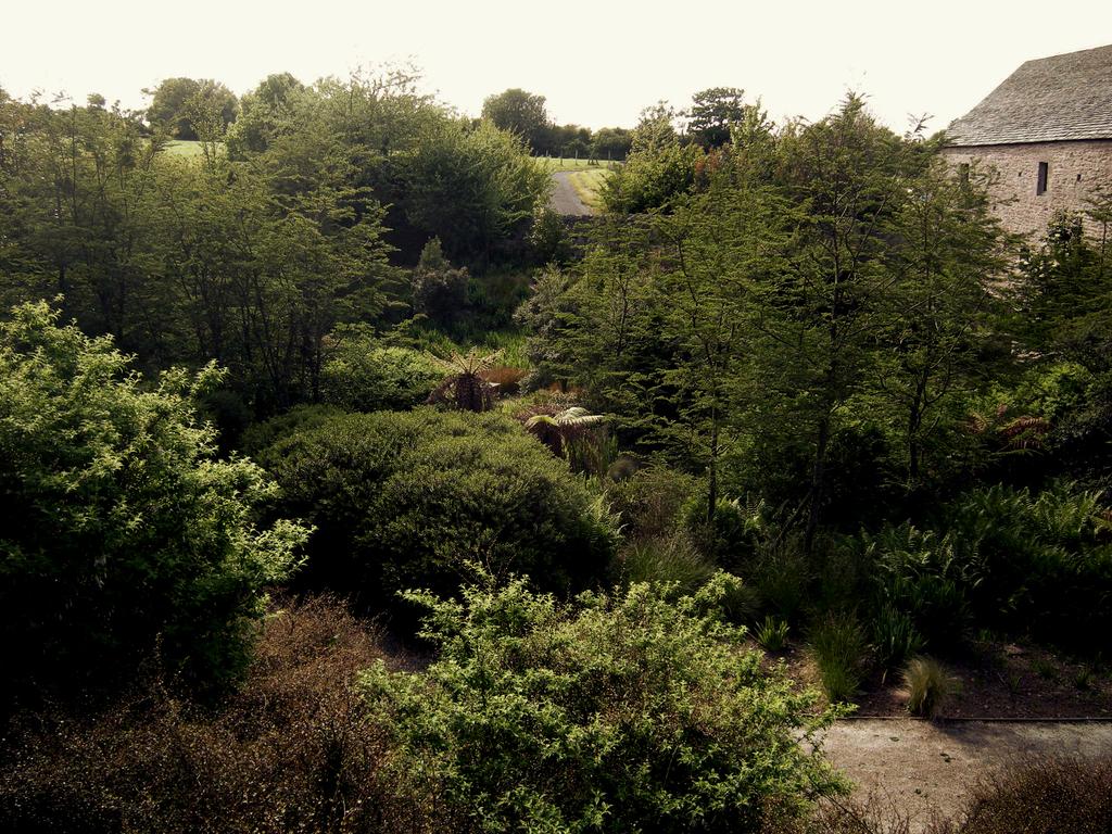 Atelier Alice Tricon / Jardins / Paysages - La Hague - Omonville-la-Rogue, presqu'île du Cotentin (50) - Sous-bois de Nothofagus