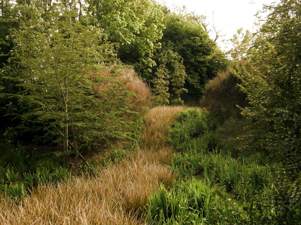 Atelier Alice Tricon / Jardins / Paysages - La Hague - Omonville-la-Rogue, presqu'île du Cotentin (50) - Riviere de Libertia formosa
