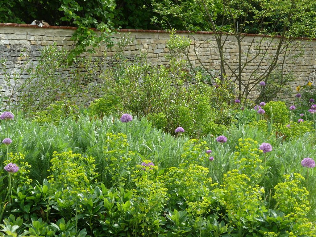 Atelier Alice Tricon / Jardins / Paysages - Renoir - Essoyes (10) - Palette végétale de sol argilo-calcaire