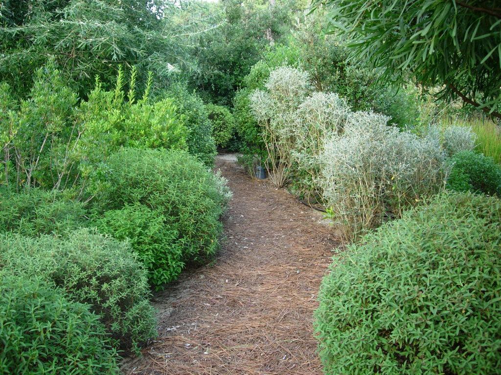 Atelier Alice Tricon / Jardins / Paysages - Cap Ferret <br> Jardin privé - Les Vallons du Ferret (33) - Cap Ferret Allée d'entrée Alice Tricon