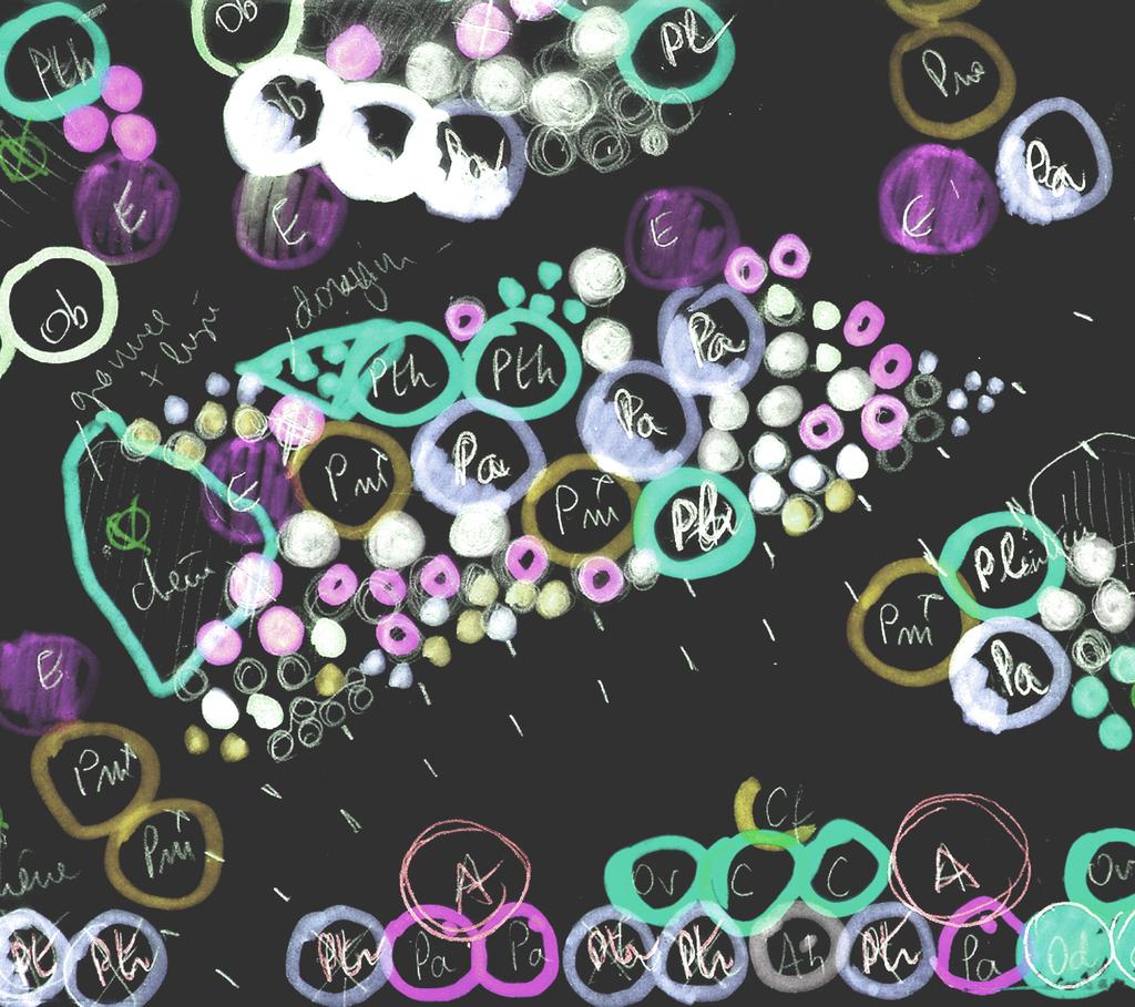 Atelier Alice Tricon / Jardins / Paysages - Cap Ferret <br> Jardin privé - Les Vallons du Ferret (33) - Cap Ferret Jardin plan de plantations Alice Tricon