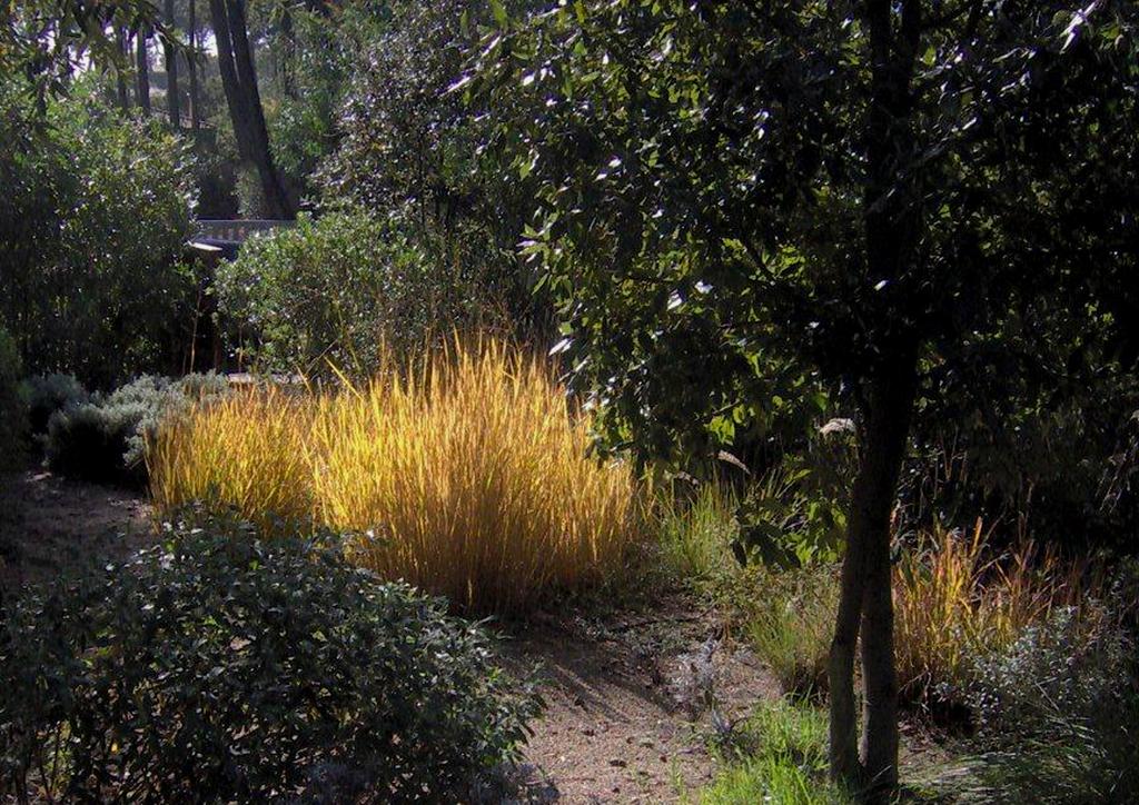 Atelier Alice Tricon / Jardins / Paysages - Cap Ferret <br> Jardin privé - Les Vallons du Ferret (33) - Cap Ferret Panicum virgatum Atelier Alice Tricon