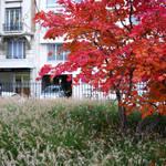 Atelier Alice Tricon / Jardins / Paysages - Les Céramiquesopération immobilière