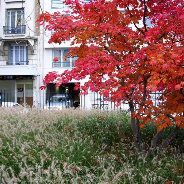 Atelier Alice Tricon / Jardins / Paysages - Les Céramiquesopération immobilière - Montreuil (93)